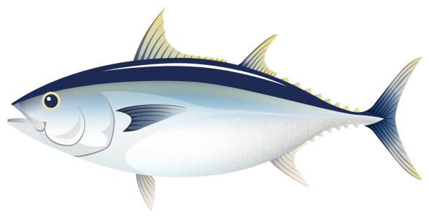 ilustrações de stock, clip art, desenhos animados e ícones de the bluefin tuna, isolated on the white background. - peixe