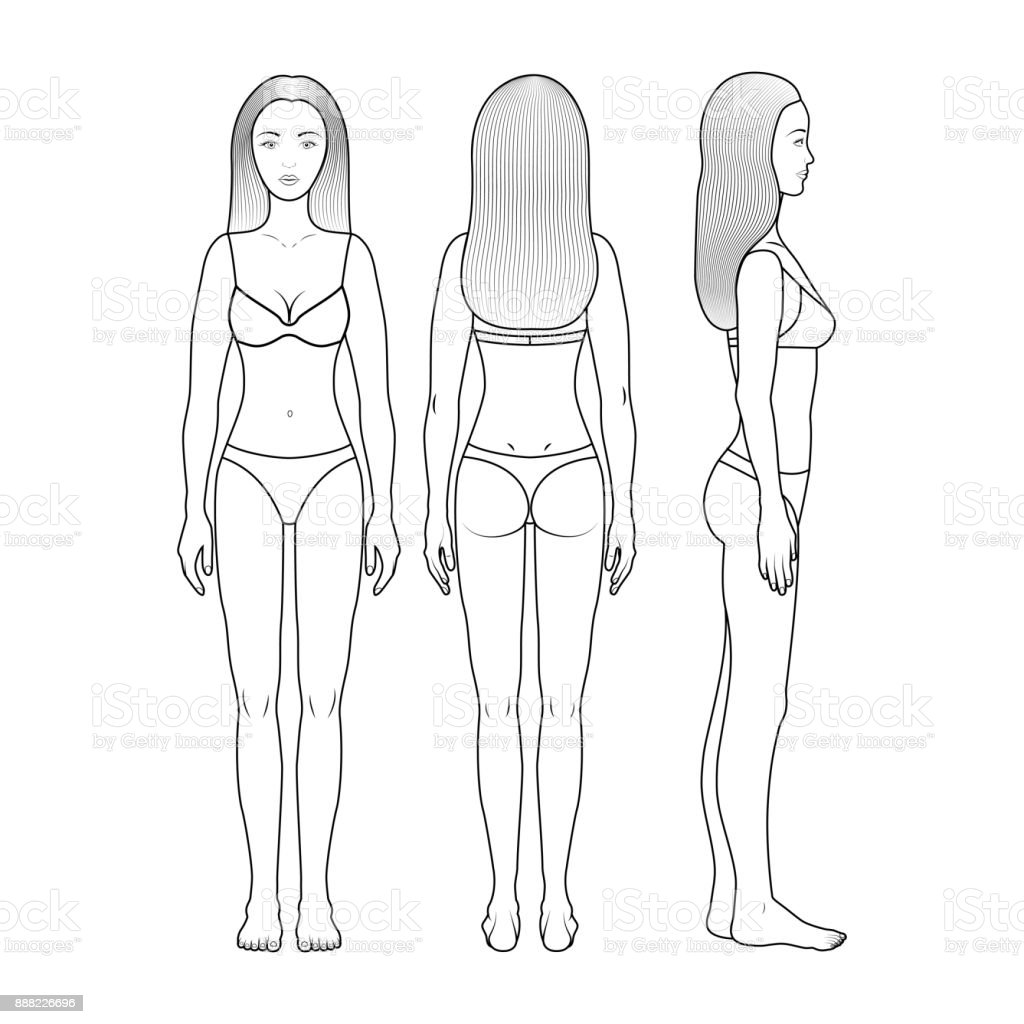 human body outline front and back drawing illustrations