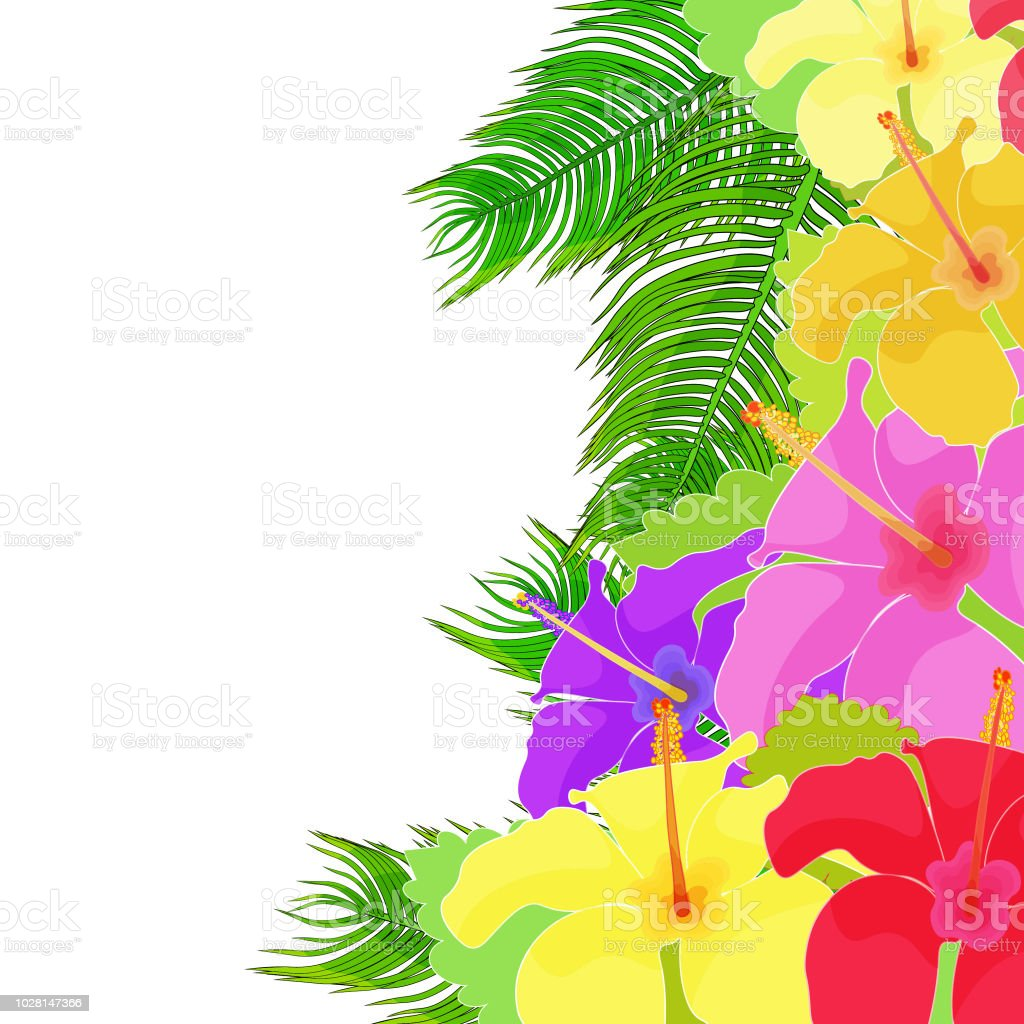 The Card Hawaiian Hibiscus Flower Vector Illustration Stock Vector