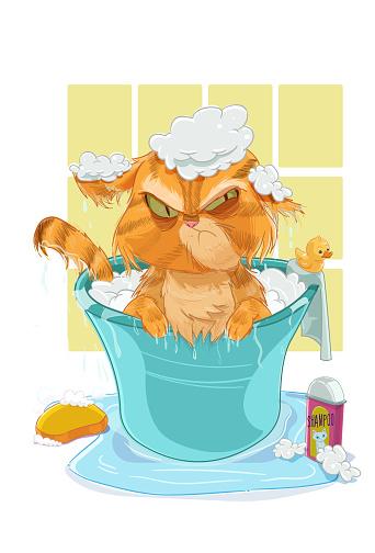 The Cat Bath