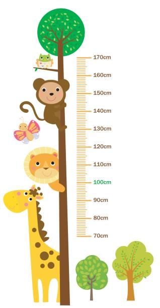 stockillustraties, clipart, cartoons en iconen met the child's height illustrations - lang lengte