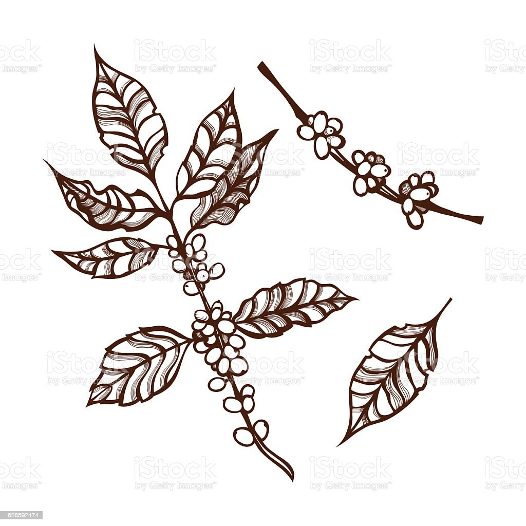 The Coffee Plant Stock Vector Art More Images Of Agriculture
