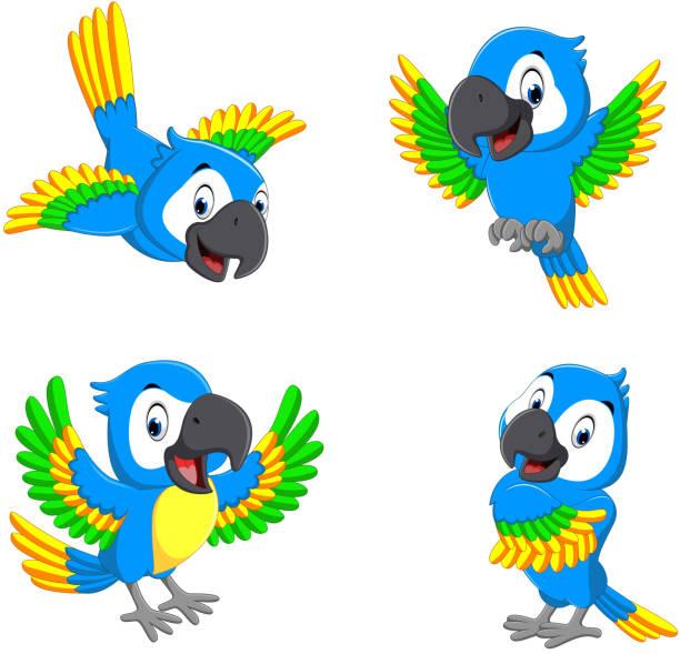 ilustrações de stock, clip art, desenhos animados e ícones de the collection of the blue parrots with happy faces - arara
