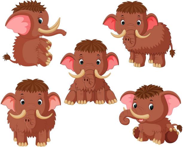 die sammlung des mammuts mit verschiedenen pose - eiszeit stock-grafiken, -clipart, -cartoons und -symbole