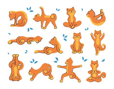 A coleção de ioga-gatos para um estilo de vida saudável. Os personagens de desenho animado