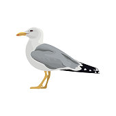 The common seagull mew gull European herring gull. Vector illustration. Element for your design. Resting curious standing sea bird
