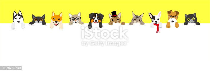 istock The cute cats and dogs lining up 1275739749