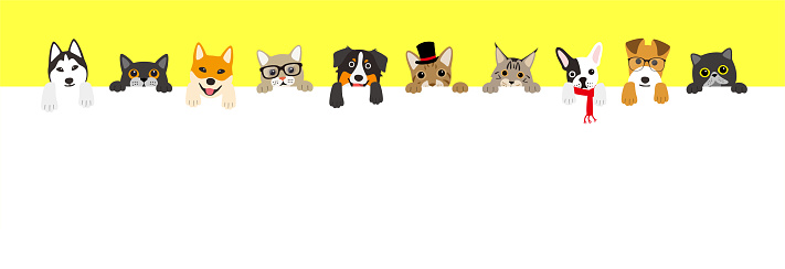 The cute cats and dogs lining up