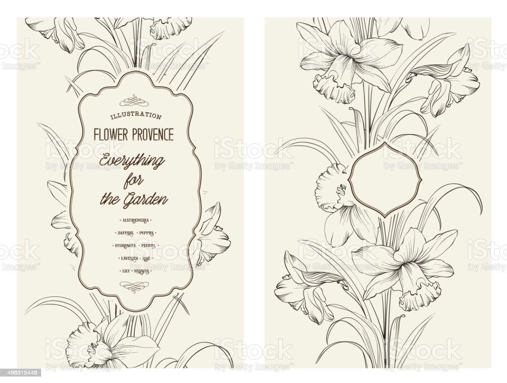 The Daffodil flower