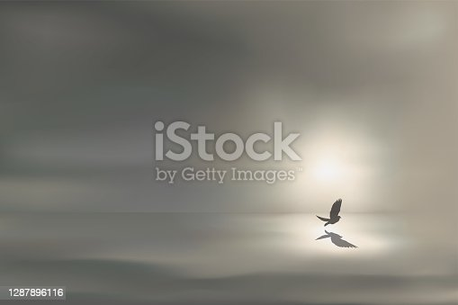 istock The day dawns on a calm and relaxing seascape, with a bird flying over a sea of oil. 1287896116