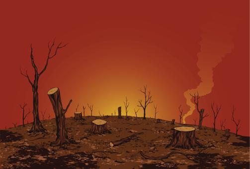 The destruction of forest