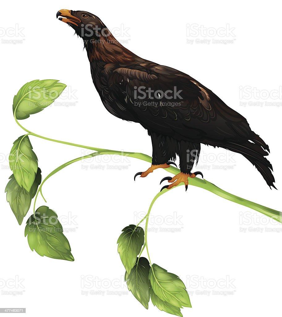 La Eagle - ilustración de arte vectorial