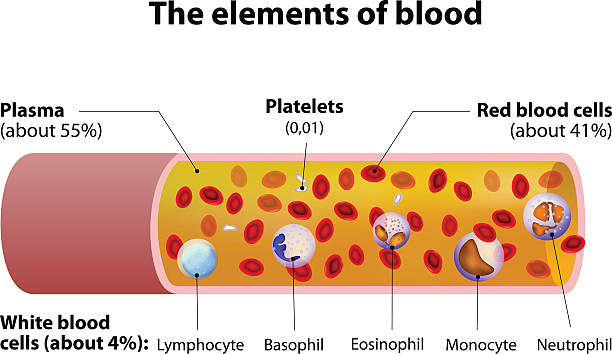 The elements of blood. blood vessel cut section The elements of blood. blood vessel cut section. platelet stock illustrations