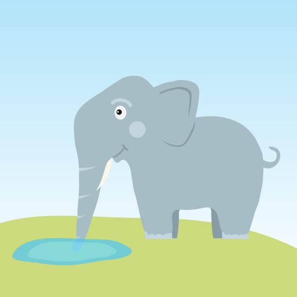 Best Elephant Drinking Illustrations, Royalty-Free Vector ...
