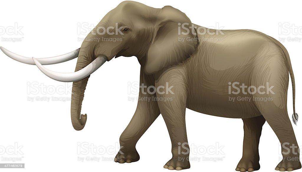 The Elephant royalty-free stock vector art