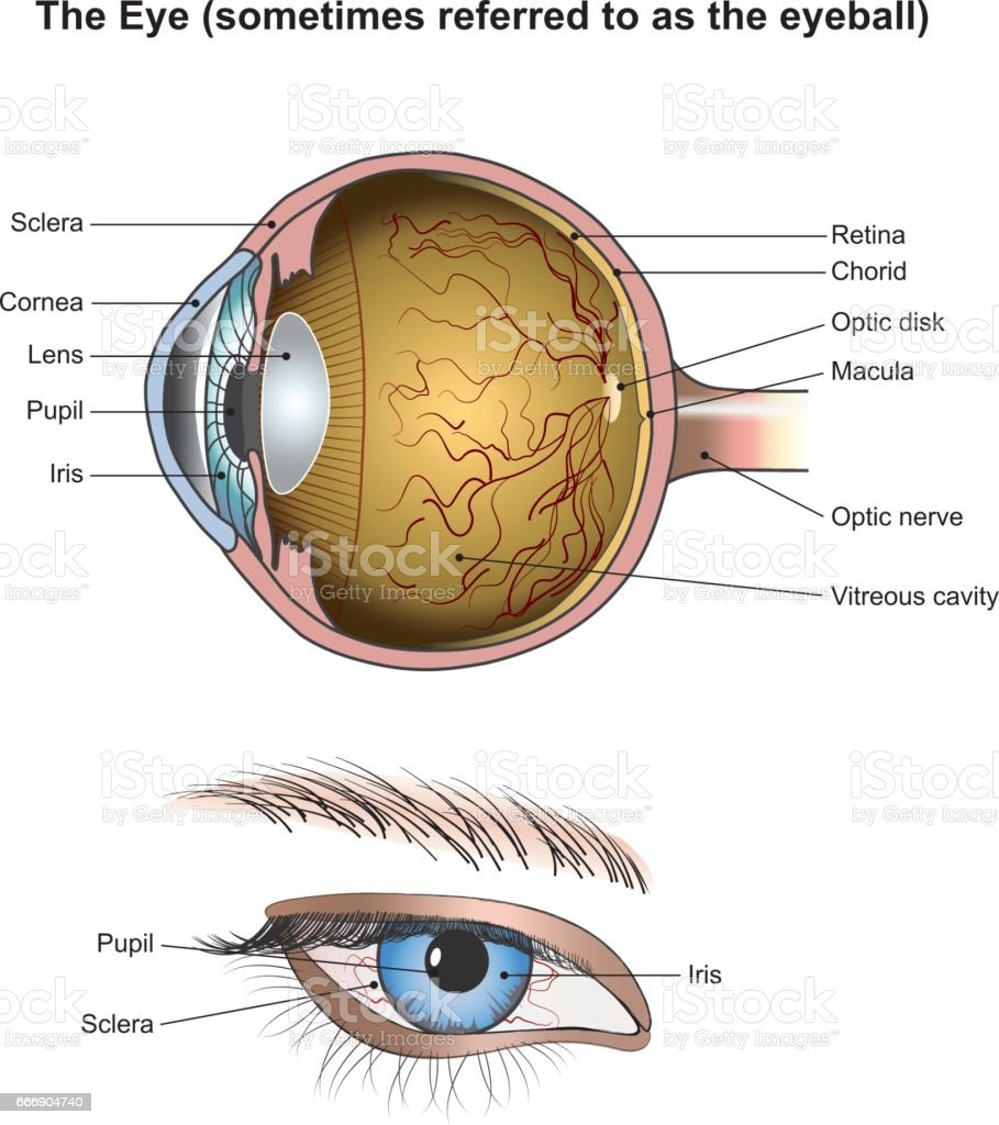 The Eye vector art illustration