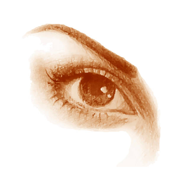 the eyes of a beautiful woman - close up stock illustrations, clip art, cartoons, & icons