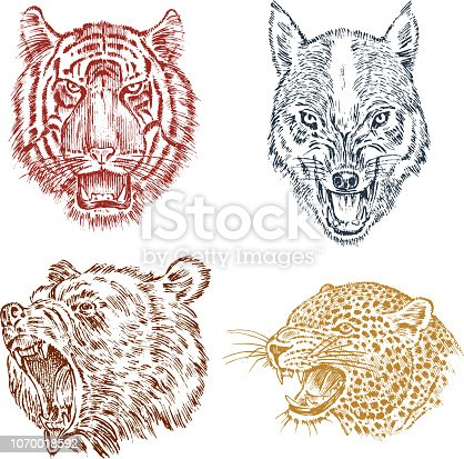 The face of brown grizzly bear, leopard and jaguar. Portrait of the wolf. Jaws of the tiger. Head of wild animal. Angry roar of a predator. Badge or emblem. Engraved hand drawn Vintage sketch
