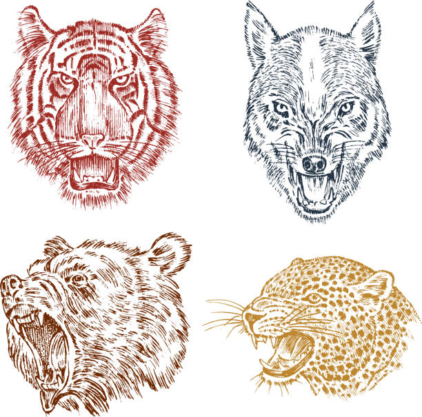 the face of brown grizzly bear, leopard and jaguar. portrait of the wolf. jaws of the tiger. head of wild animal. angry roar of a predator. badge or emblem. engraved hand drawn vintage sketch. - jaguar stock illustrations