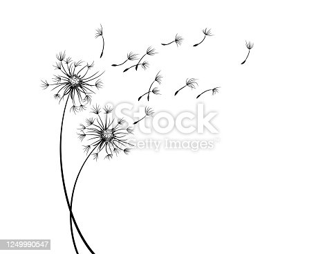 The Field dandelion flower sketch with flying seeds.