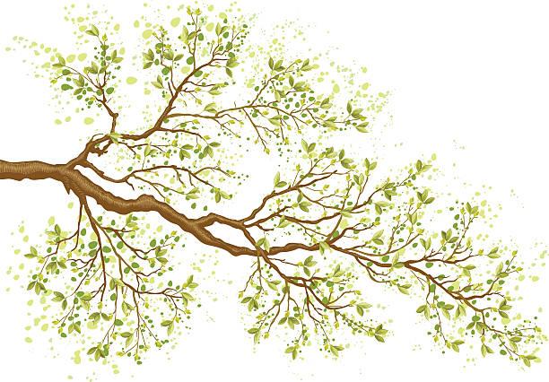pierwszy liście - gałąź część rośliny stock illustrations