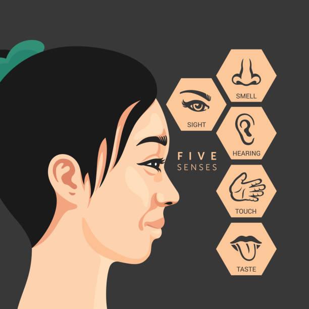 die fünf sinne - sensorischer impuls stock-grafiken, -clipart, -cartoons und -symbole