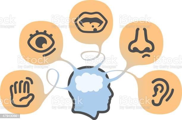 The Five Senses Stockvectorkunst en meer beelden van Aanraken