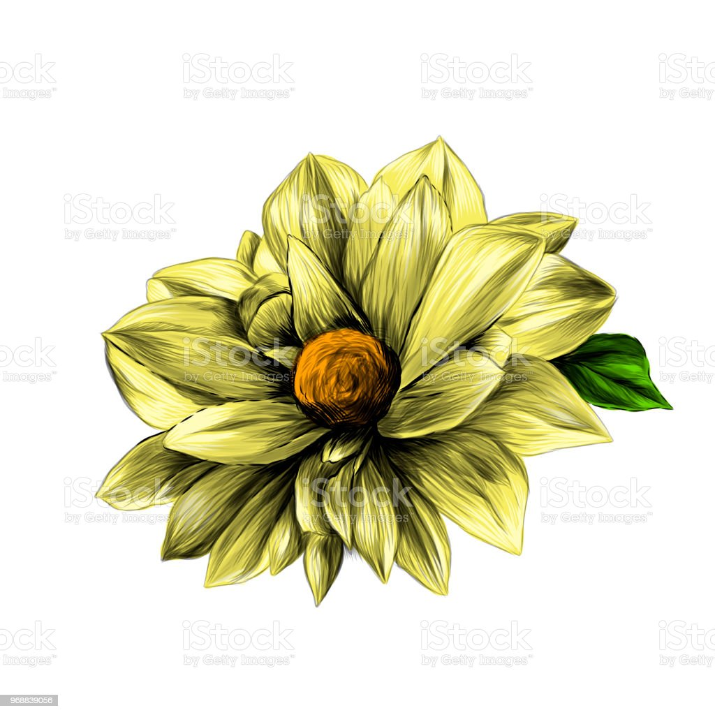 The flower bud of a dahlia on a white background stock vector art the flower bud of a dahlia on a white background royalty free the flower bud izmirmasajfo