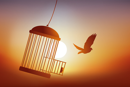 The freedom of a bird leaving its cage.