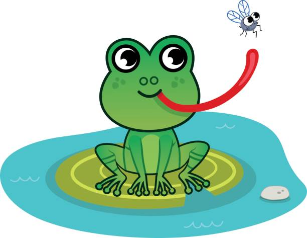 Best Clip Art Of Frogs Eating Flies Illustrations, Royalty ...