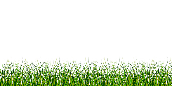 The grass is at the bottom of the picture. Boho green pattern on soft white background. Nature illustration. Stock image. EPS 10.