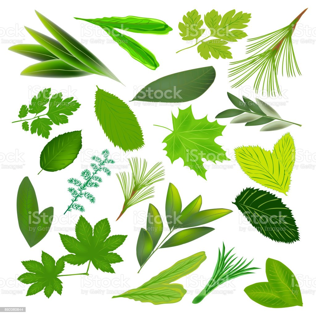 The Green Foliage Leaves Of Different Plants Green Leaf Isolated