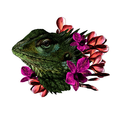 The head of a chameleon in the flowers of orchids and plumeria floral arrangement