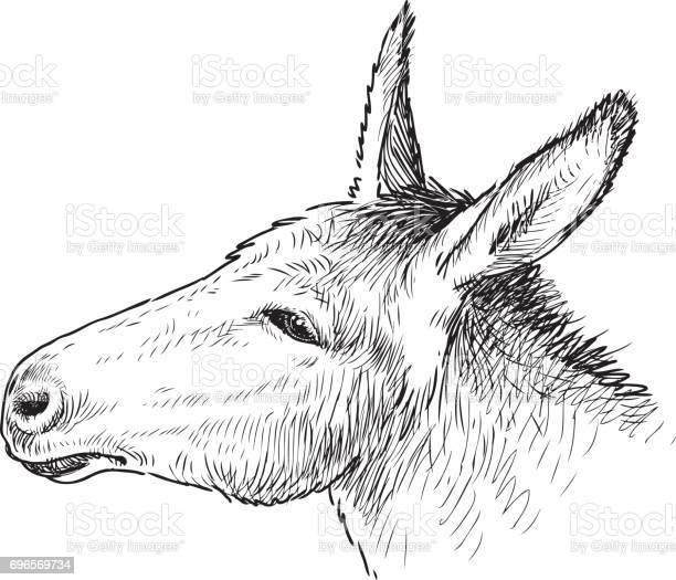 The head of a sad donkey vector id696569734?b=1&k=6&m=696569734&s=612x612&h=0 gcujcsxja yk8atzt0dp4x t xklbavhae m5ujwa=