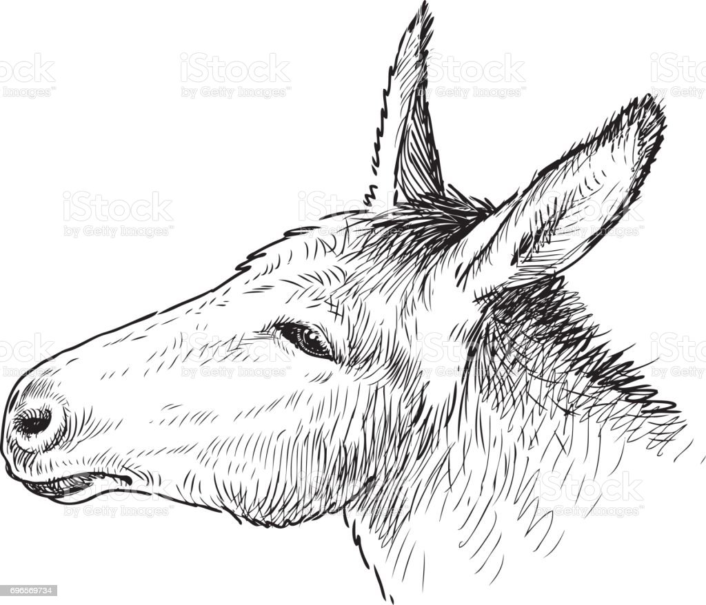 the head of a sad donkey vector art illustration