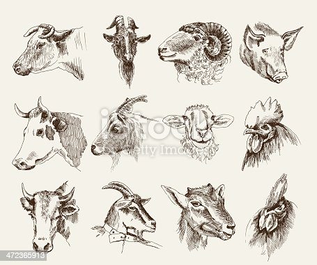 head of farm animals. set vector sketches