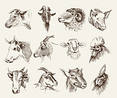 The heads of various farm animals