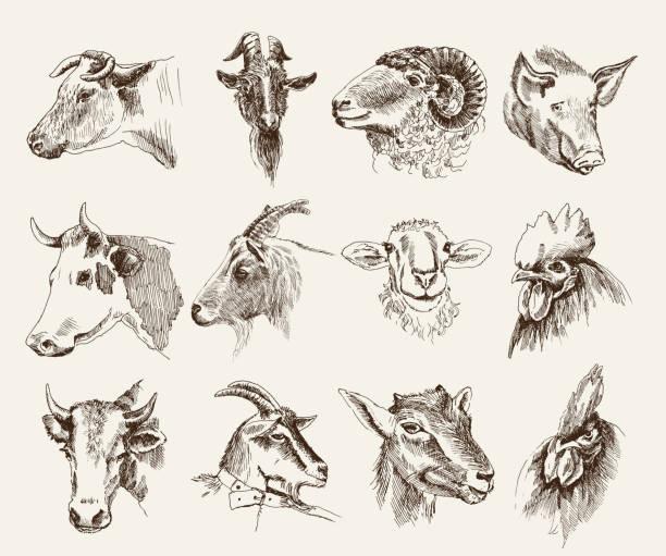 Tête des animaux de la ferme - Illustration vectorielle