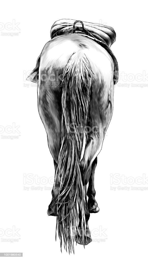The Horse Is A Rear View Of The Ass A Little And Sticking His Head ...