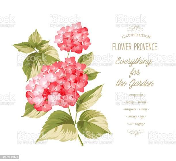 The hortensia flower vector id497808374?b=1&k=6&m=497808374&s=612x612&h=bhgxqhflq 7qo scxkfrwolsblsh6haosbkx5rkfvse=
