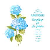 The Hortensia flower