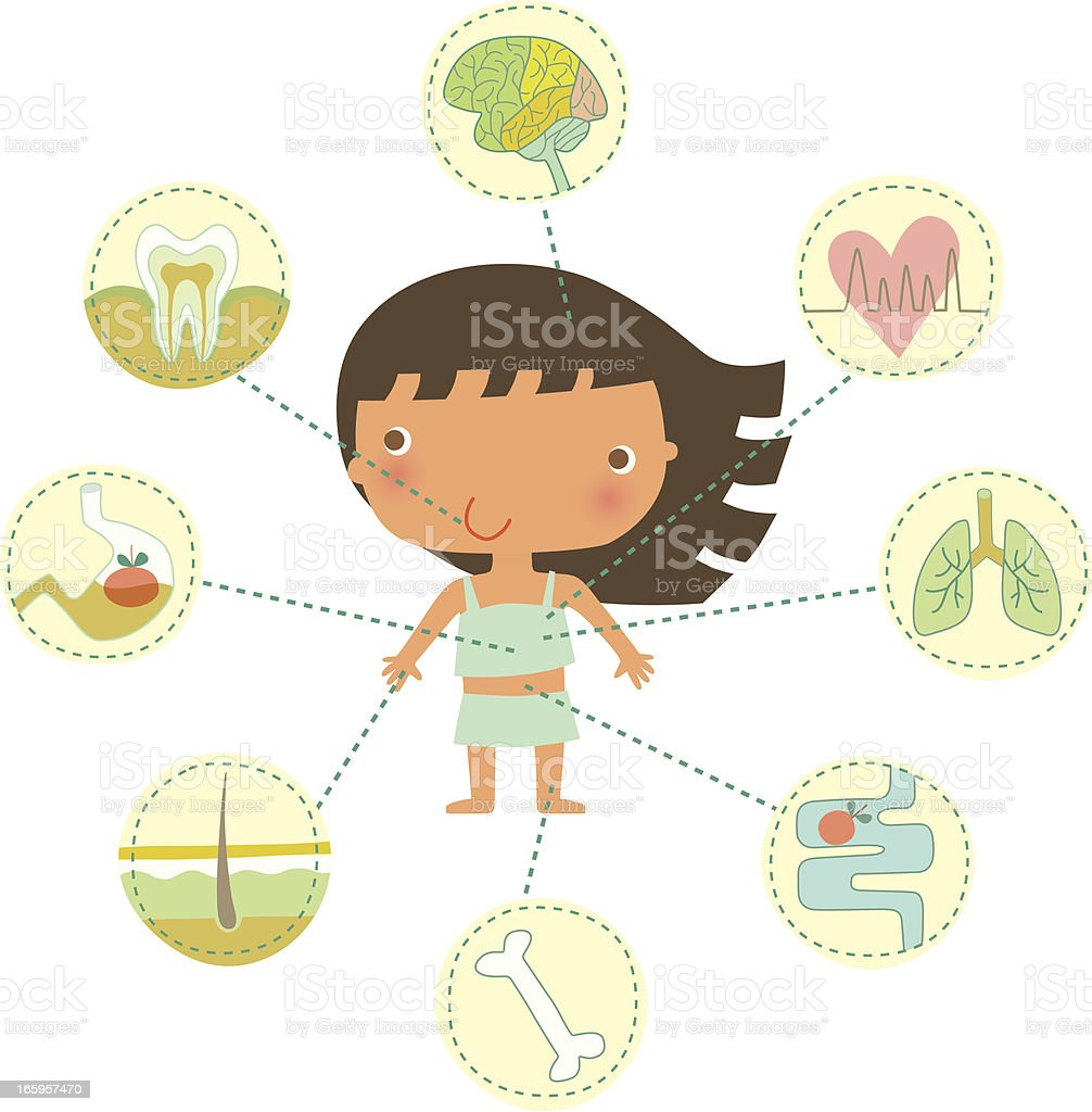 The Human Body royalty-free stock vector art