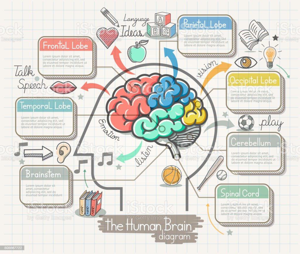 The Human Brain Diagram Doodles Icons Set. vector art illustration