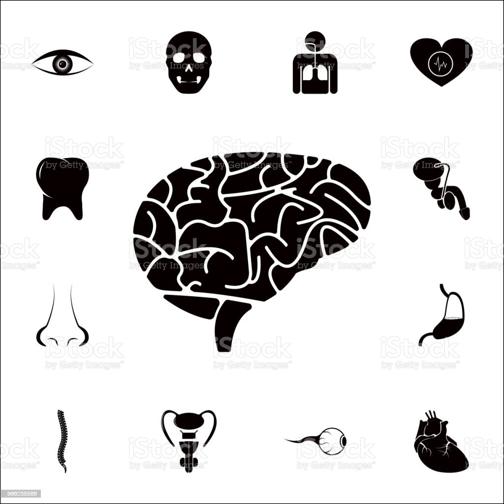The human brain icon detailed set of human parts icons premium the human brain icon detailed set of human parts icons premium quality graphic design ccuart Choice Image