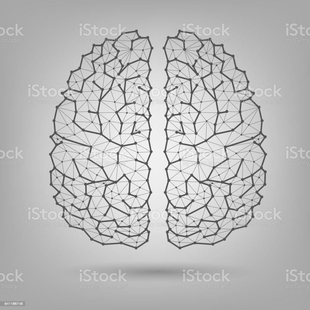 Das Menschliche Gehirn Struktur Stock Vektor Art und mehr Bilder von ...