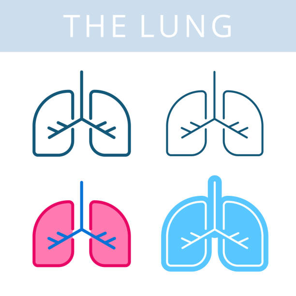 The internals icons. Lung and respiratory system vector outline symbols. The internals outline icon set. Lung, respiratory system symbols. Viscera and inside organs vector linear pictograms. Thin line medical and anatomy infographic elements for web, presentation, network. oxygen stock illustrations