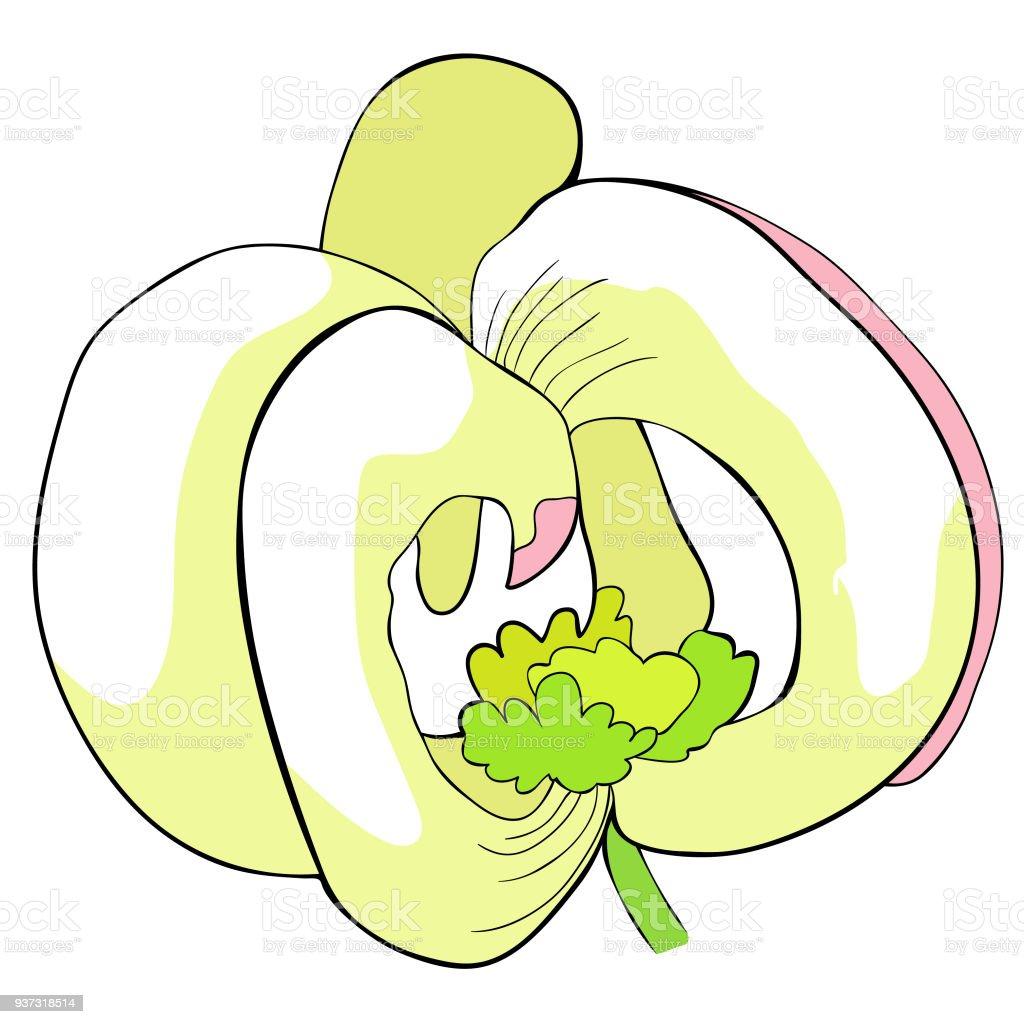 Ilustración de El Es De La Florida Cornejo Flor Ilustración De ...