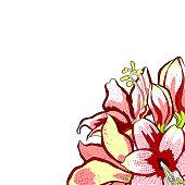 card  is hippeastrum amaryllis flower.  vector  illustration