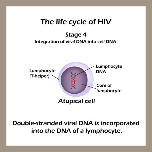 biology and life cycle of hiv Home a level and ib  biology  hiv life cycle a2 biology powerpoint- on the wild side and infection, immunity and forensics 00 / 5.