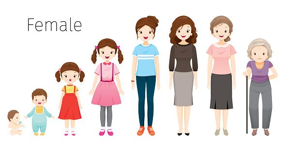 Ilustración de El Ciclo De Vida De La Mujer Generaciones Y ...